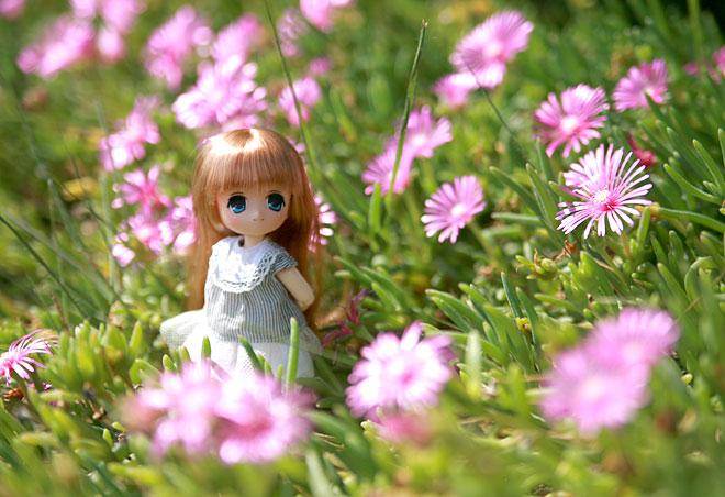 オビツ11お花畑にて
