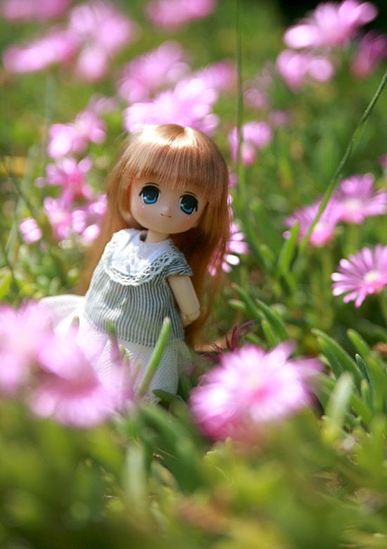 オビツ11お花畑にて2