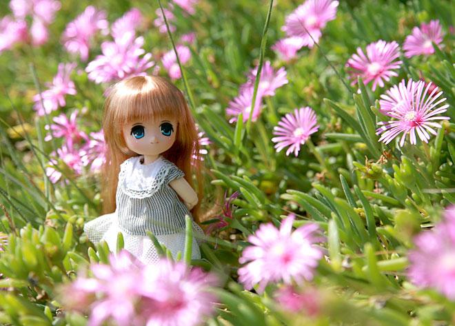 お花畑の中のオビツ11