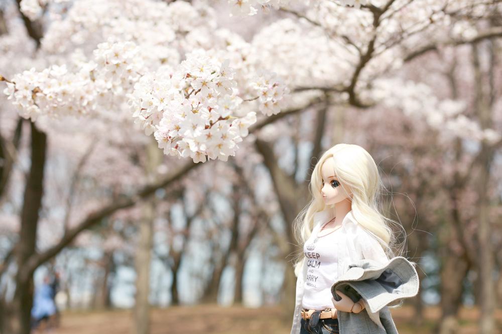 桜を鑑賞するメロディーちゃん
